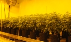 Texas examines Compassionate Cultivation